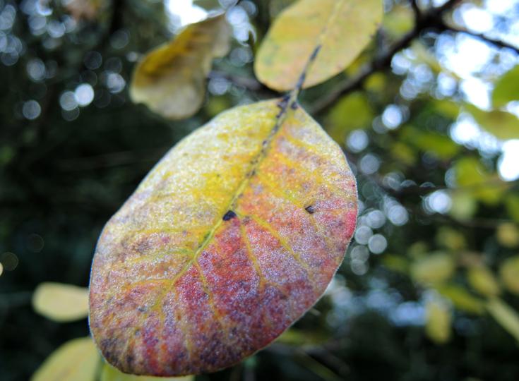 frosty-leaf-on-tree