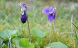 blue-flower-4