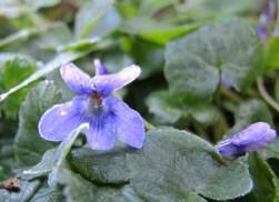 frosty-violet
