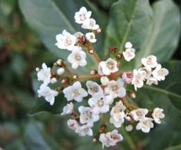 white-blossom-5