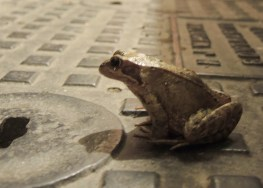 photo of frog