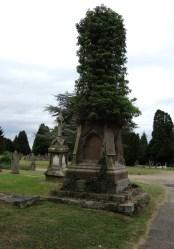 ivy-clad-grave