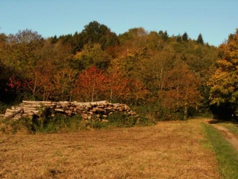 credenhill-woods