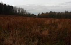 grazing-area-7
