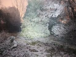 frosty-tree