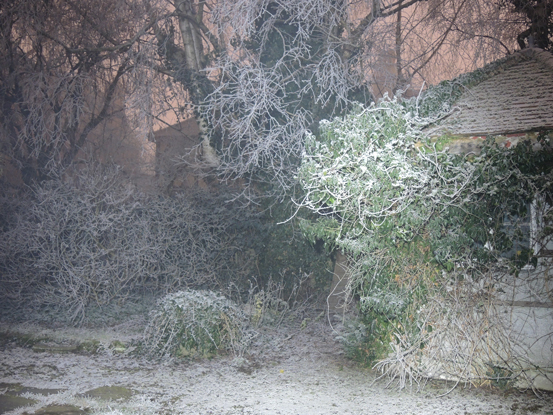 frosty-trees