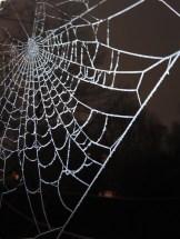 frosty-web-3
