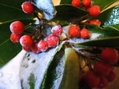 sugar-berries-2
