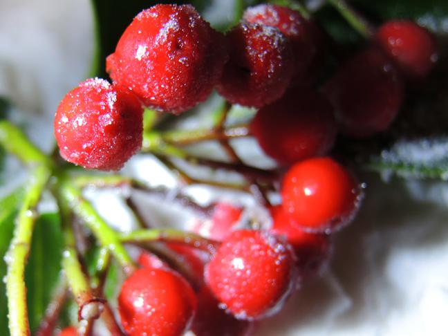 sugar-berries-4