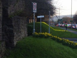 Photo of daffodils by Hereford's Old Wall