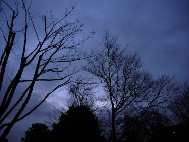 Photo of winter trees at dawn