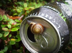 Photo of snail on drinks can