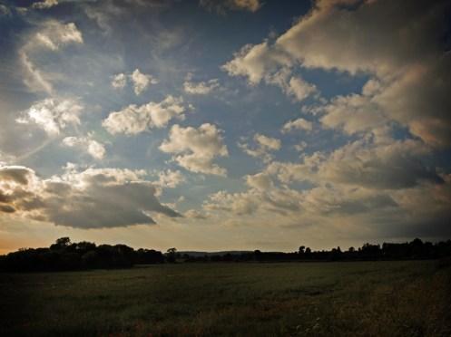 poppy-field-7