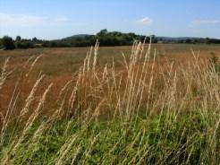 Photo of grassy verge