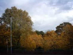 autumnal-trees-urban