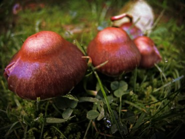 Photo of fungi