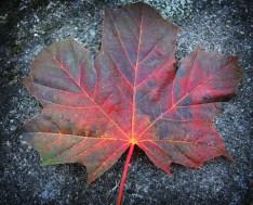 leaf-oct-2