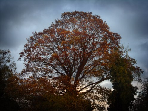 Photo of autumnal trees