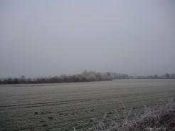 frosty-field-1