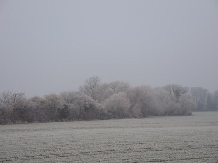 frosty-field-2