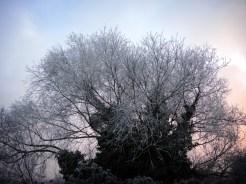 frosty-tree-6