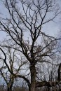 cool old tree