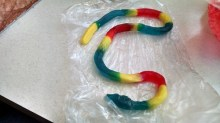 gummy rattlesnake @ Oak View mall in Omaha