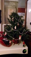 the tiny tree in the kitchen