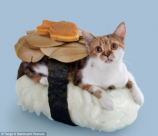 I believe this is a freshwater eel roll - and a live cat.