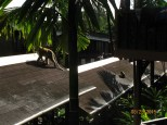 Naughty Monkeys_5