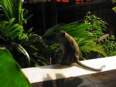 Naughty Monkeys_6