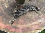 Chillin Cat