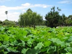 Botanical Gardens_3