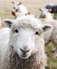 Experience The Compassion Of The Good Shepherd?