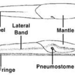Slug Anatomy Diagram Data Flow For Event Management System Slugs Phylum Digestive Picture