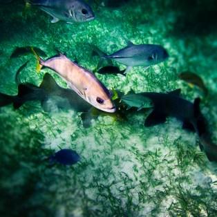 More snorkeling/diving!