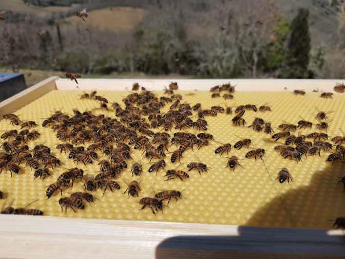 L'azienda bioviticola toscana Castello di Meleto inaugura il parco delle api  Image of L'azienda bioviticola toscana Castello di Meleto inaugura il parco delle api