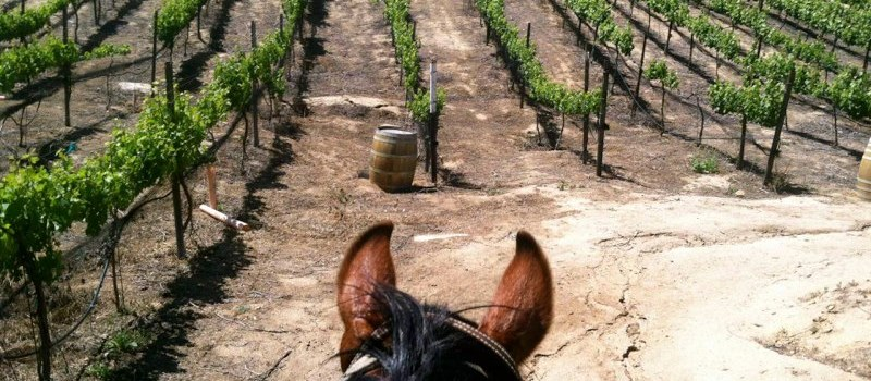 Vineyard Trail Rides