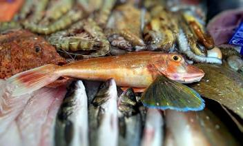 Livello1-ristorante di pesce a Roma- pesce fresco- pescheria- fish & cocktail-pranzo-cena-aperitivo