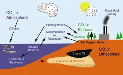 Detailed Scientific Nitrogen Cycle Diagram Chem 110 Burning Of Fossil Fuels Eleana Debeauville