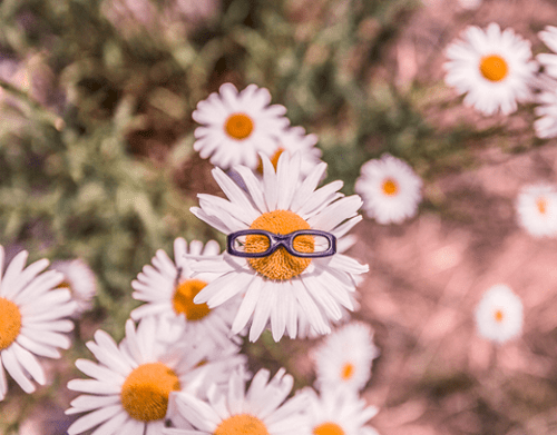 Daisies wearing glasses