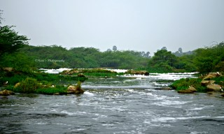 Highly Polluted River