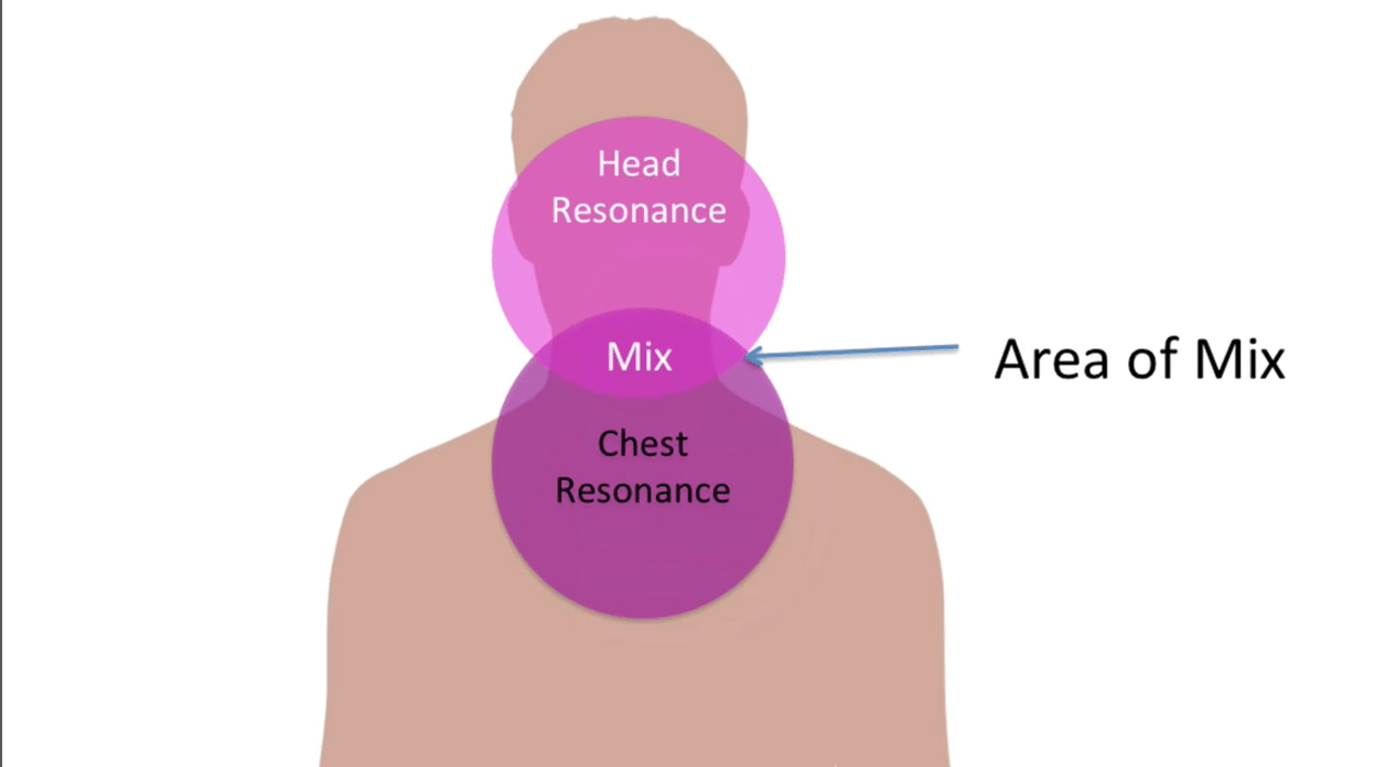 hight resolution of diagram of head and chest