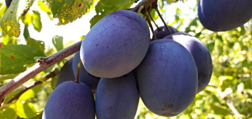 Općina Prozor-Rama nastavlja s poticajima u poljoprivredi
