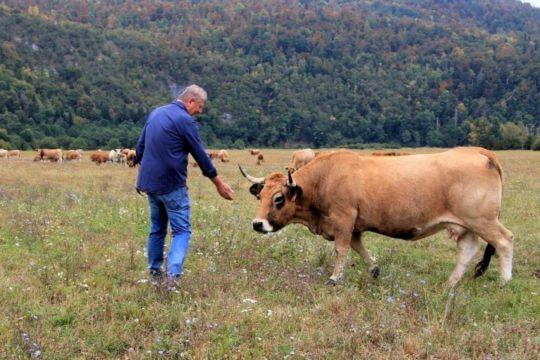 Bez hitne intervencije, stočarstvo će neminovno propasti