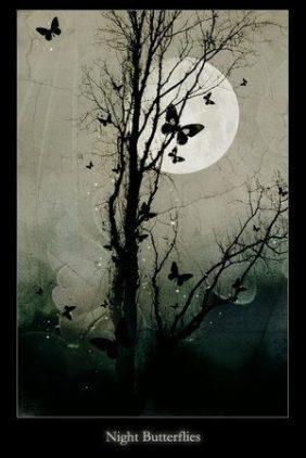 night_butterflies_by_silent_reverie.jpg