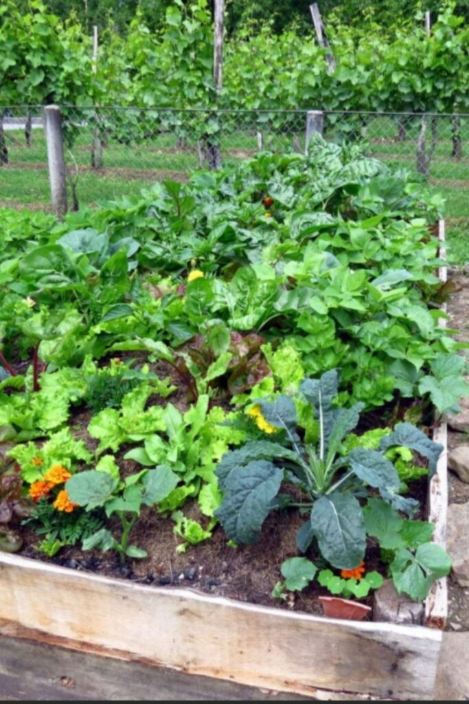 Florida Vegetable Gardening Month By Month