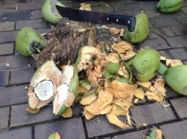 We opened the coconuts