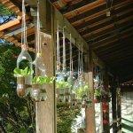 Hanging Bottles Garden
