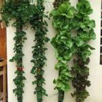 Vertical wall herb garden project